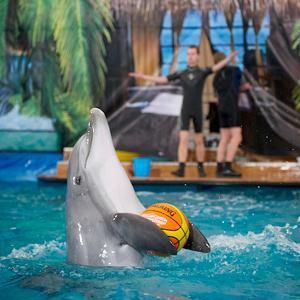 Дельфинарии, океанариумы Вяземского