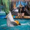 Дельфинарии, океанариумы в Вяземском