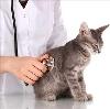 Ветеринарные клиники в Вяземском